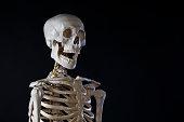 骸骨、オープンくわえる、コピースペース