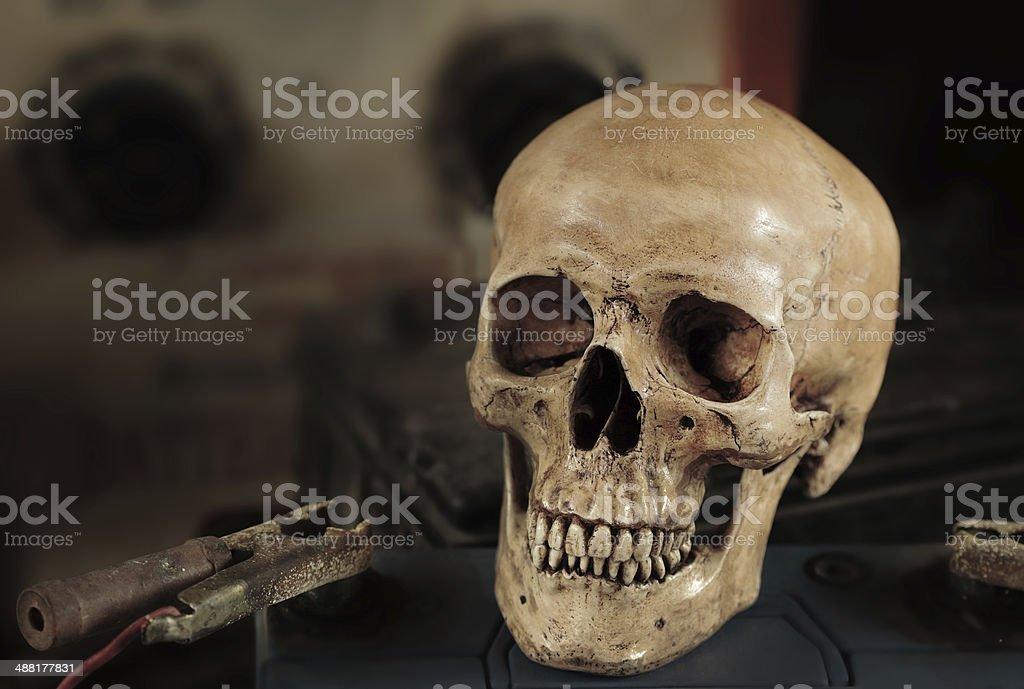 Human Skeleton Organ Stock Photo & More Pictures of Anatomy | iStock