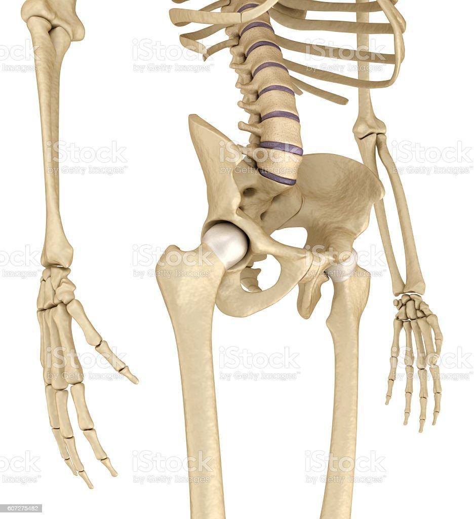 Sacrum anatomy pictures