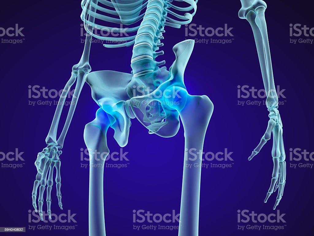 Human skeleton pelvis and sacrum xray view stock photo more human skeleton pelvis and sacrum xray view royalty free stock photo ccuart Choice Image
