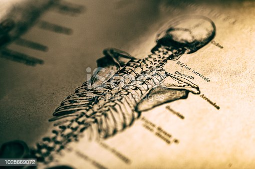 Human skeleton in old book