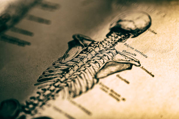 Human skeleton Human skeleton in old book spine body part stock pictures, royalty-free photos & images