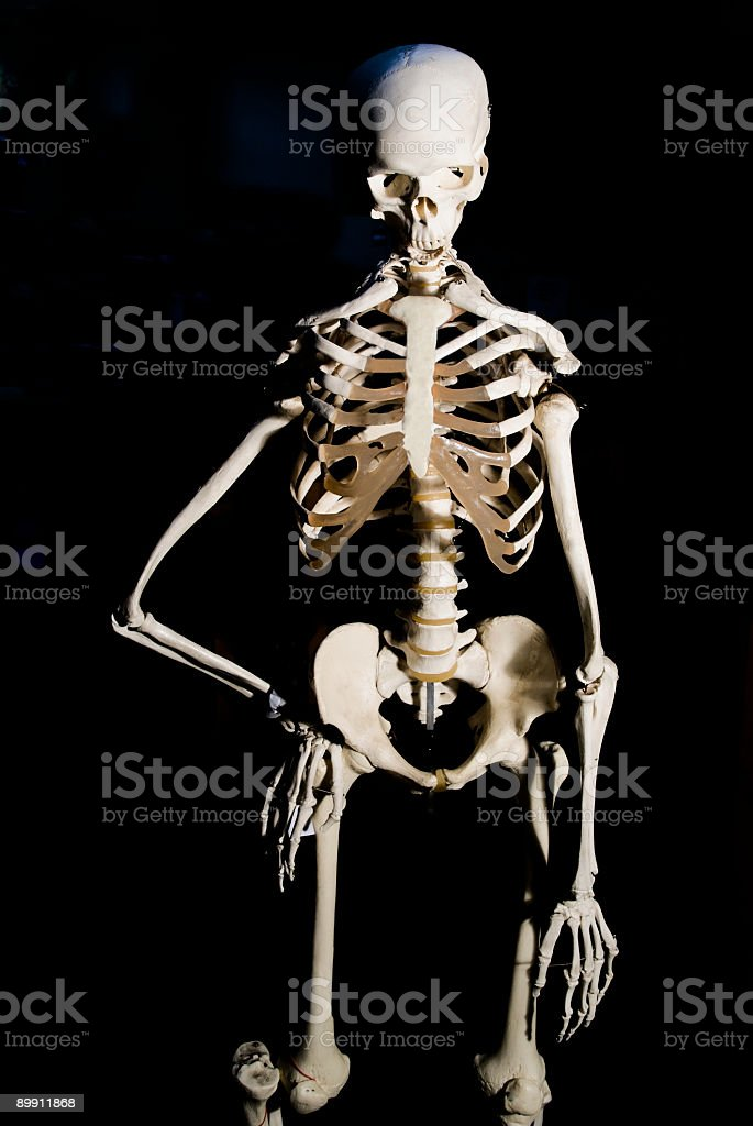 Esqueleto humano foto de stock libre de derechos