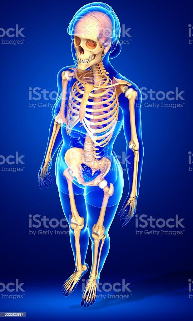 Fotografía de Vista Lateral De Esqueleto Humano y más banco de ...
