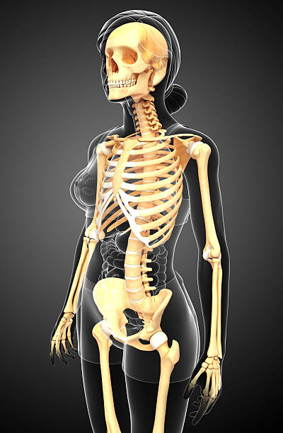 Human skeleton side view Illustration of human skeleton side view human rib cage stock pictures, royalty-free photos & images
