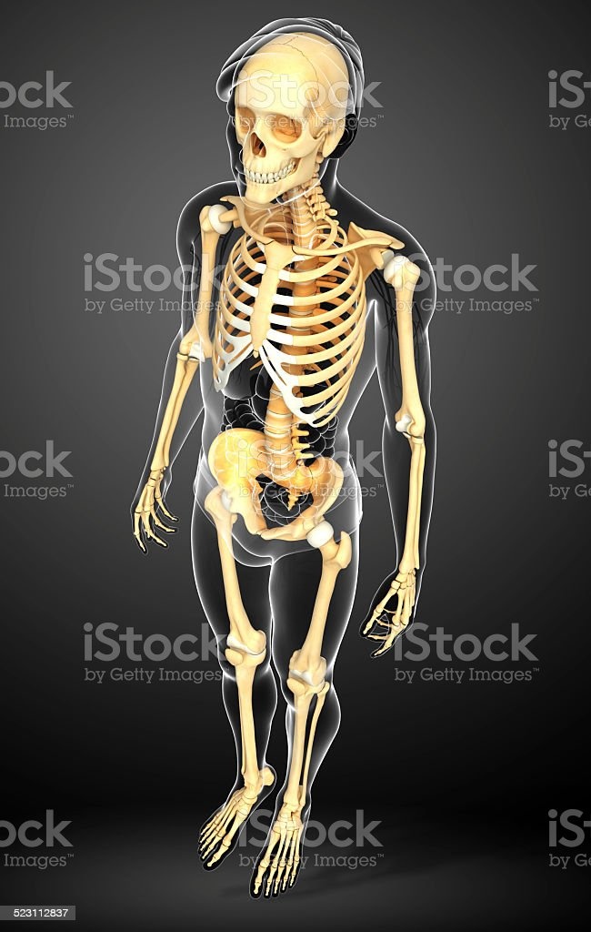 Human Skeleton Side View Stock Photo More Pictures Of Anatomy Istock
