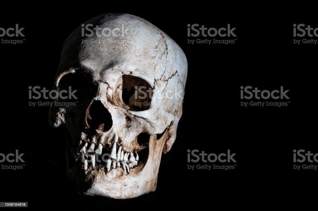 Human skeleton skull head isolated on black stock photo