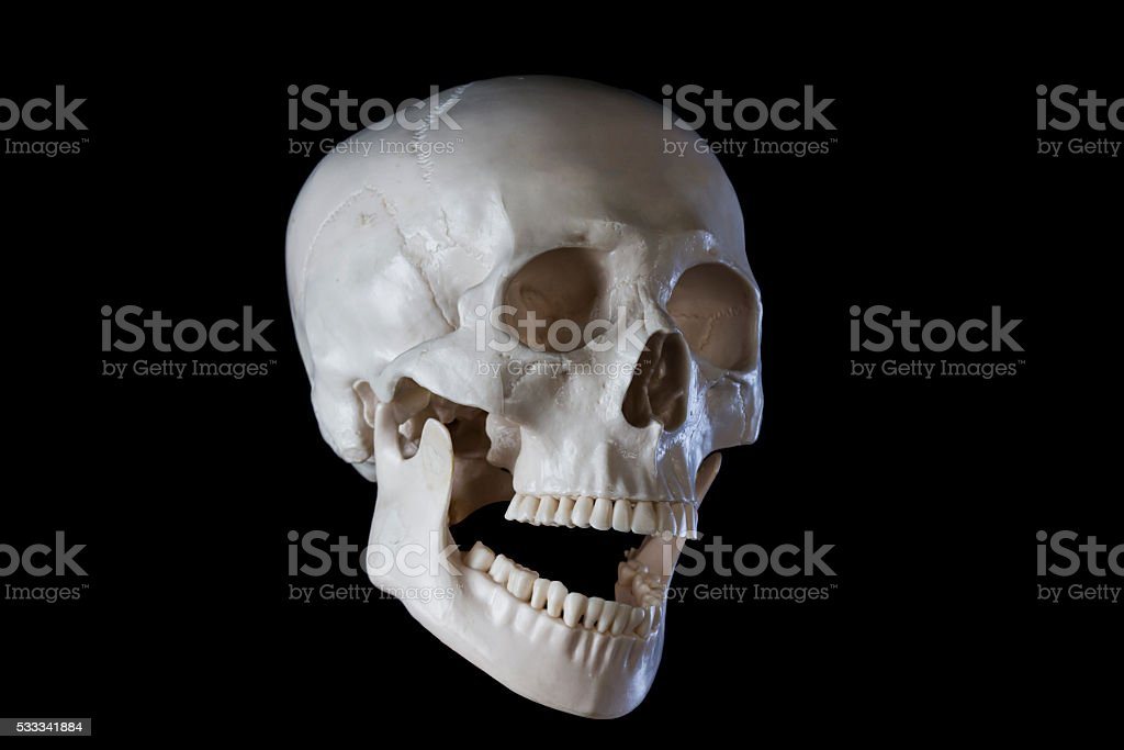 Human skeleton skull, opened mouth stock photo