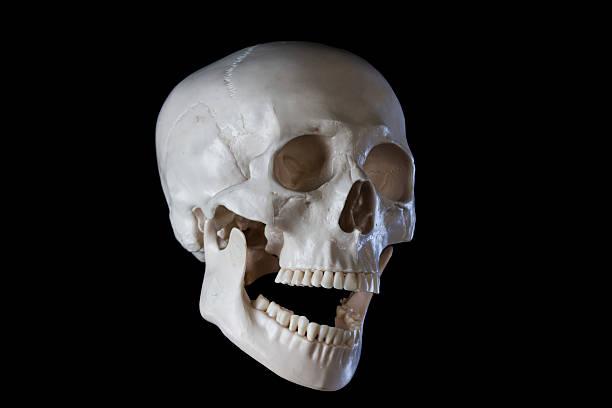 menschliches skelett schädel, öffnete den mund - zum totlachen stock-fotos und bilder