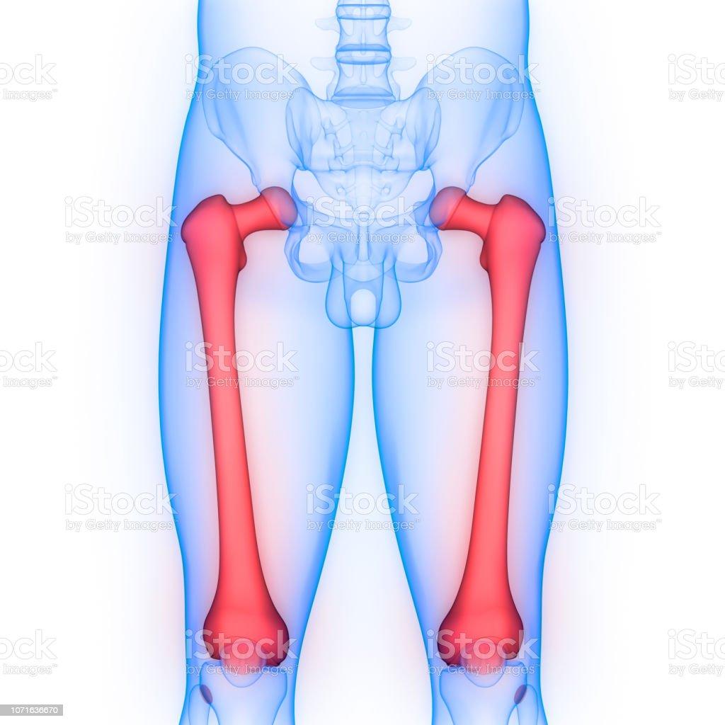 Dolor articulacion femur derecho