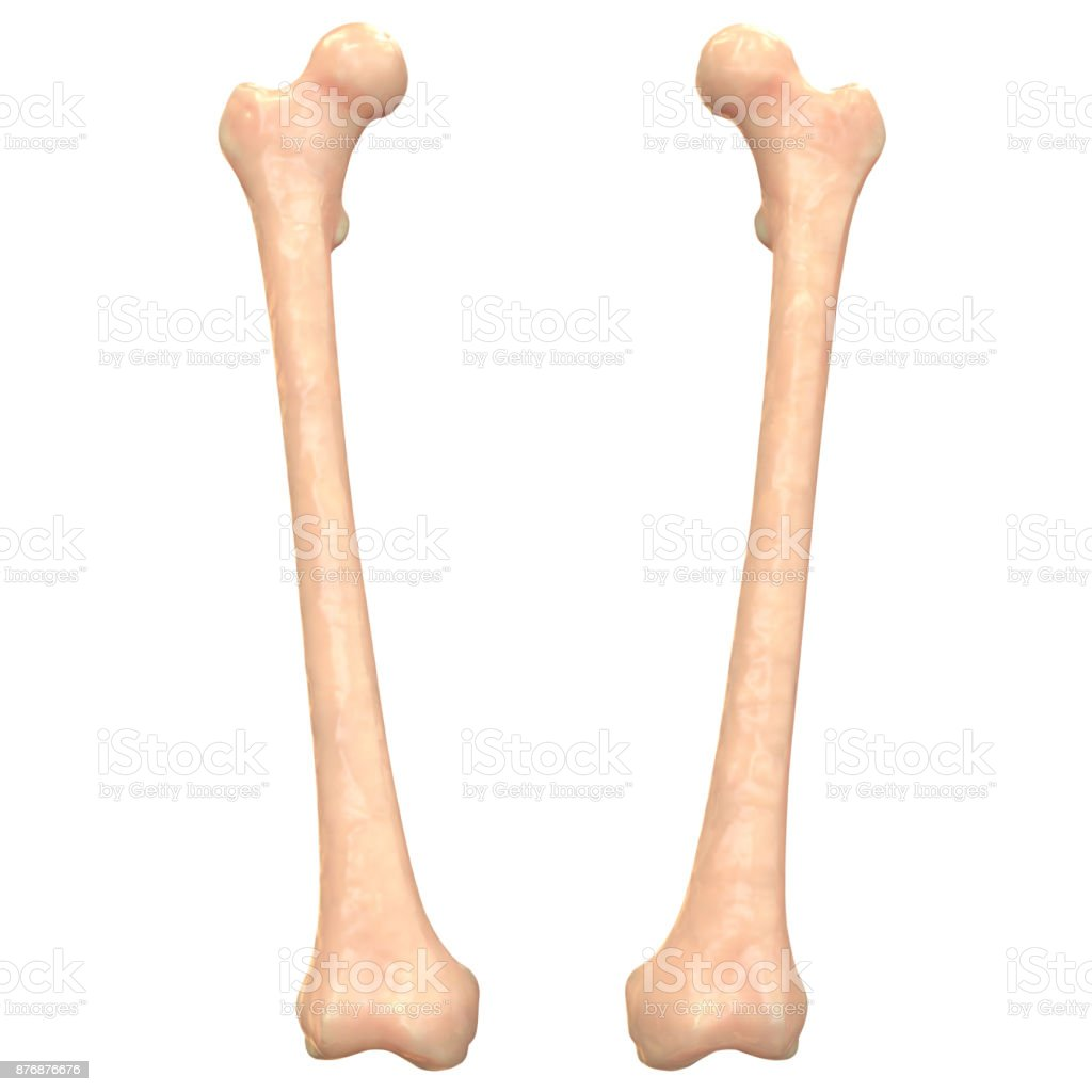 Fotografía de Anatomía De Los Huesos Esqueleto Sistema Peroné Humana ...