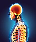 istock Human Skeleton System. 531865376