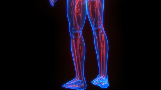 3D Illustration Concept of Human Skeleton System With Nervous System Anatomy