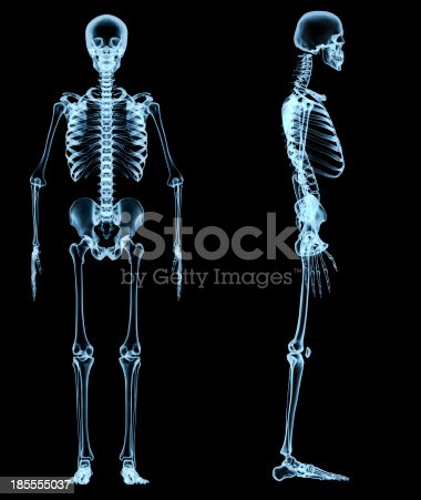 istock human skeleton under the x-rays 185555037