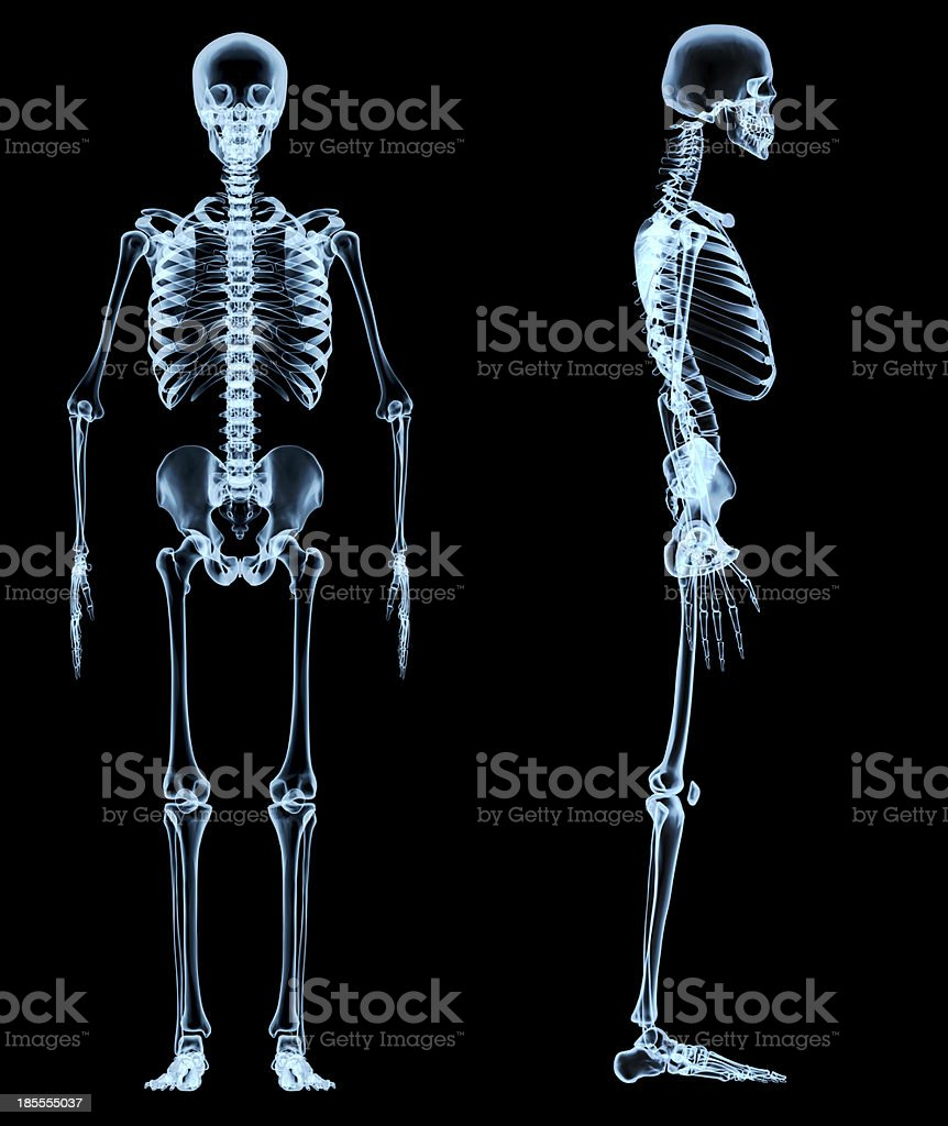 human skeleton under the x-rays stock photo