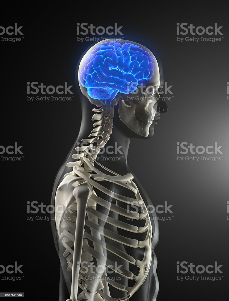 Human skeleton with glowing brain stock photo