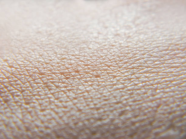 Human skin macro photo Human skin macro photo peel plant part stock pictures, royalty-free photos & images
