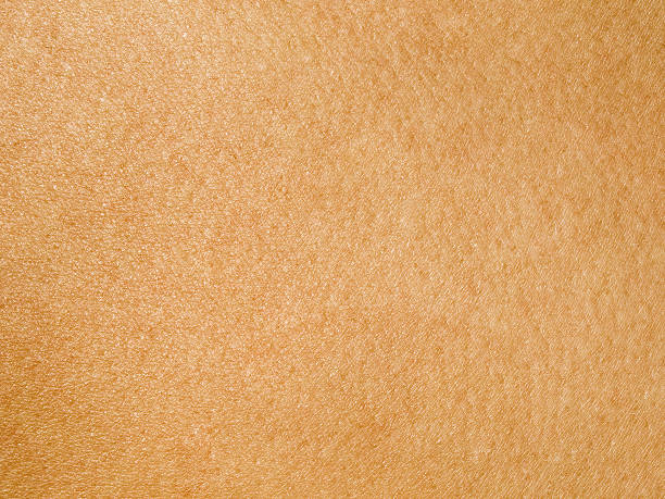 Human Skin ::: MORE TEXTURES & BACKGROUNDS ::: human skin stock pictures, royalty-free photos & images