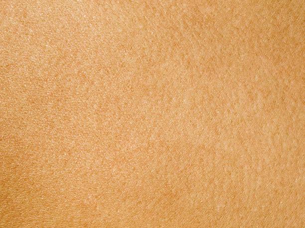 human skin - menselijke huid stockfoto's en -beelden