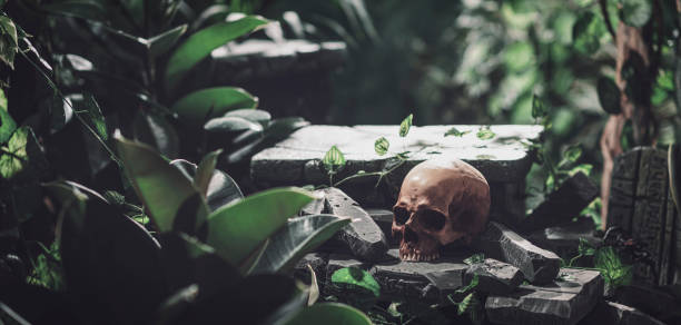 Human skull and ancient ruins in the jungle stock photo