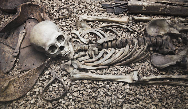 human skull and bone remains laying on rocks - human skeleton stock photos and pictures