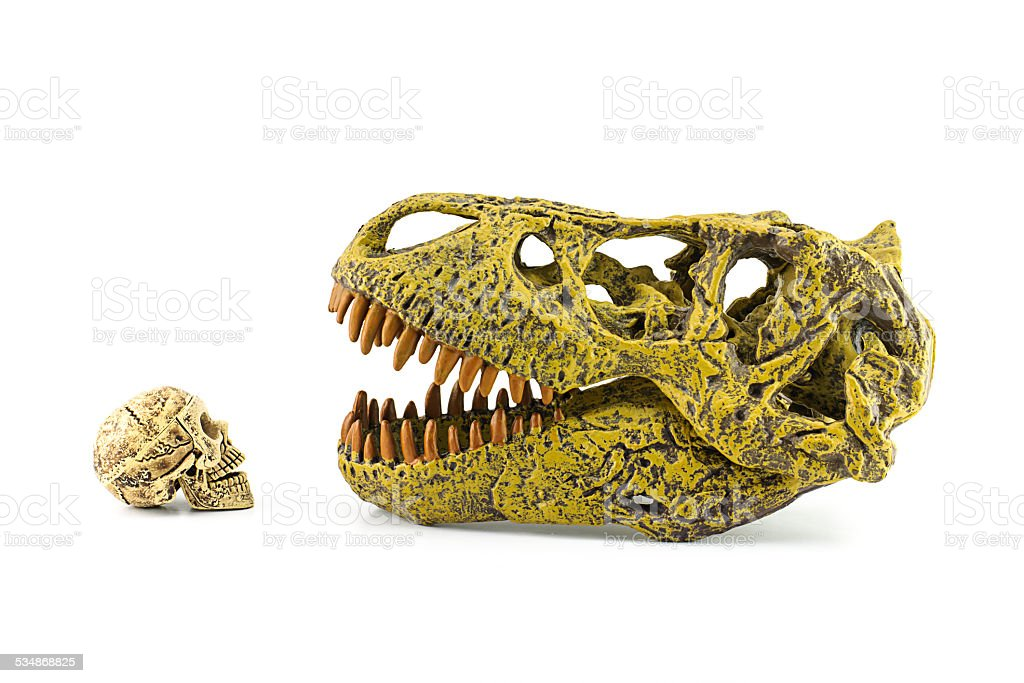 Human skull and T-rex isolated on white. stock photo