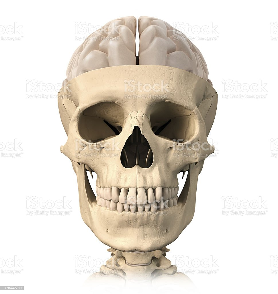 Human skull cutaway with half brain on top front view stock photo human skull cutaway with half brain on top front view royalty free ccuart Images