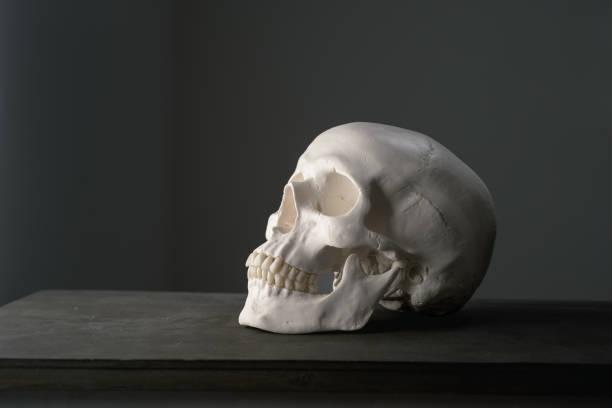 Menschlicher Schädel von der Seite – Foto