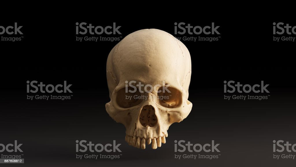 Human Skull Front Stock Photo More Pictures Of Anatomy Istock