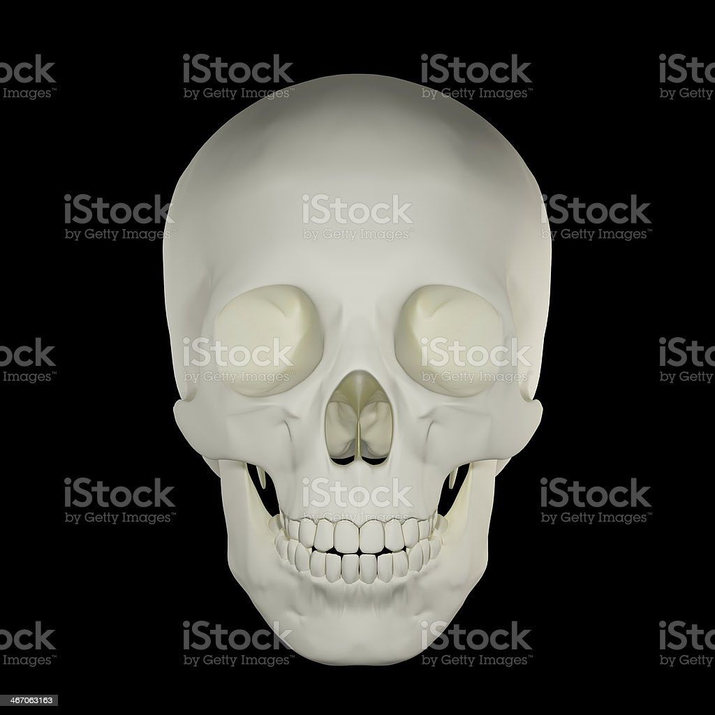 Human Skull Front View Stock Photo More Pictures Of Anatomy Istock