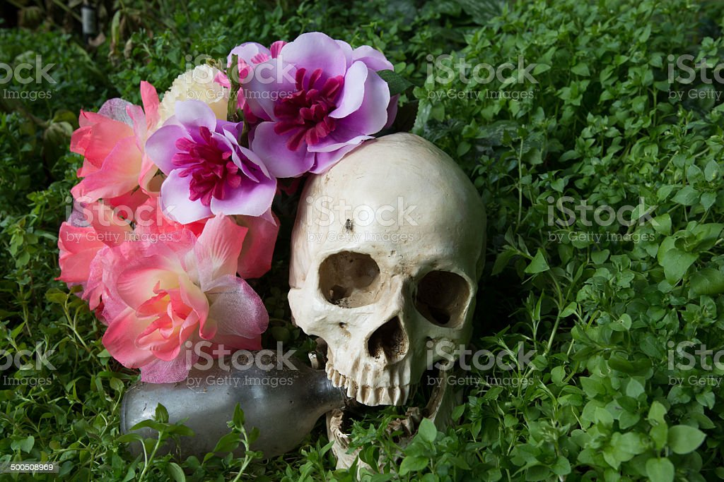human skull in the cemetery stock photo