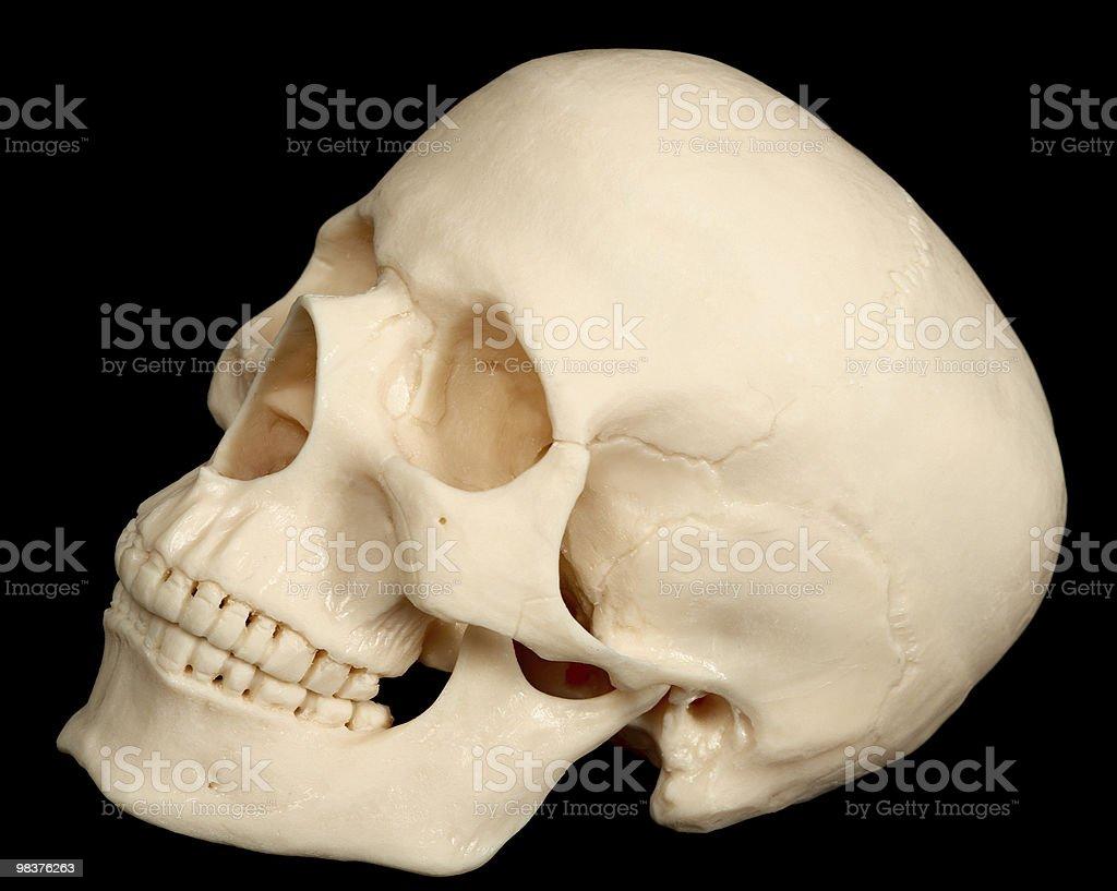 Teschio umano isolato su sfondo nero foto stock royalty-free