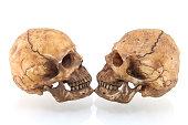 白い背景に孤立した人間の頭蓋骨