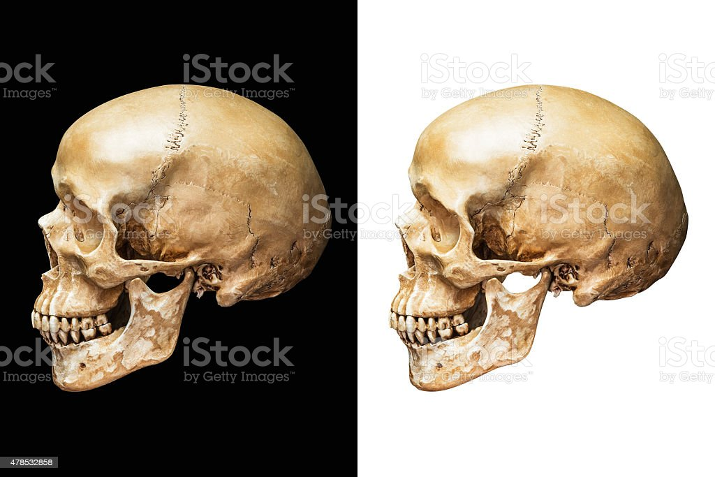 Human skull isolated stock photo