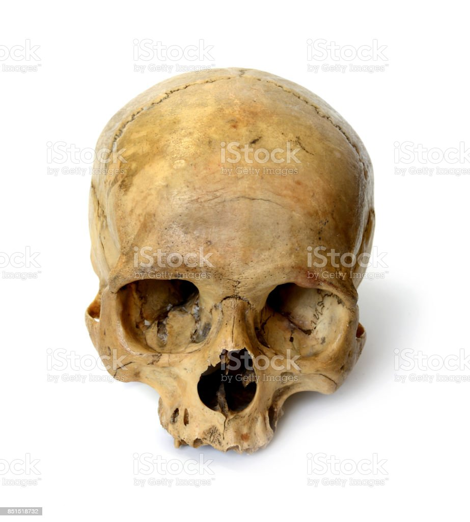 Human skull on a white background. stock photo