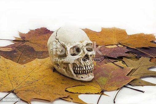 1176385551 istock photo Human skull on autumn leaves. 859804500