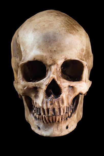 lowest price 9b1de 1cac1 Human skull on black background stock photo