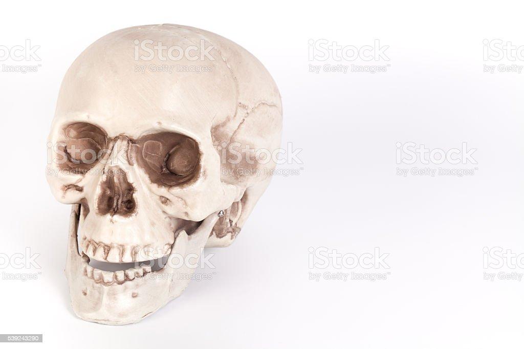 Cráneo humano sobre fondo blanco, aislado  foto de stock libre de derechos