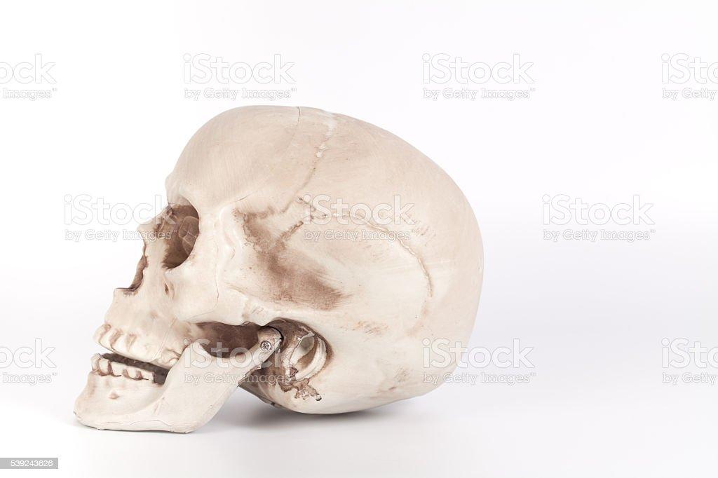Human skull on isolated white background royalty-free stock photo