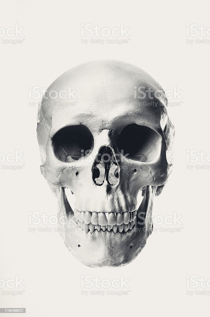 Human Skull (Old Style) stock photo
