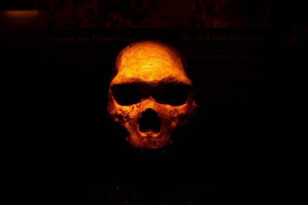 human skull human ancient skull  parietal lobe stock pictures, royalty-free photos & images