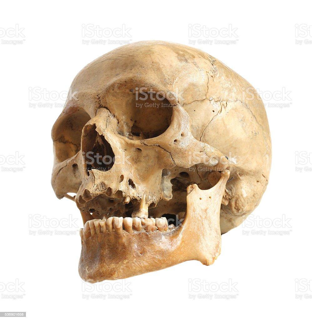 Human skull. stock photo