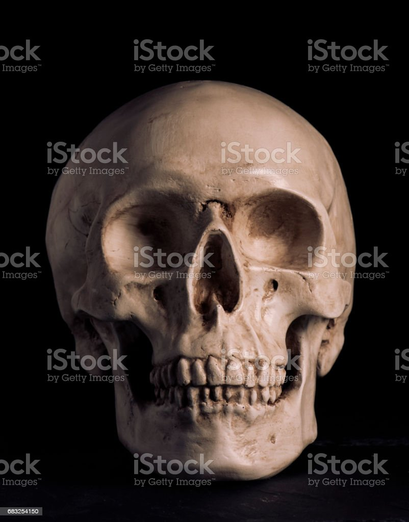 Human skull Lizenzfreies stock-foto