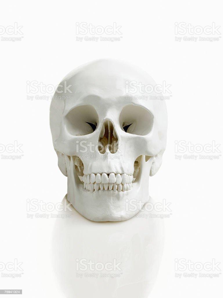 формы норм черепа человека фото кто знает какое