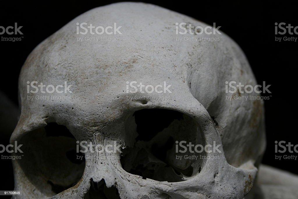 Human Skull royalty-free stock photo
