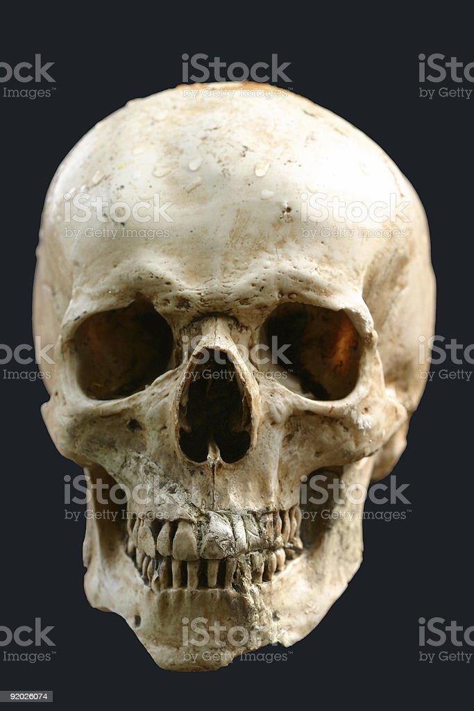 human Schädel – Foto
