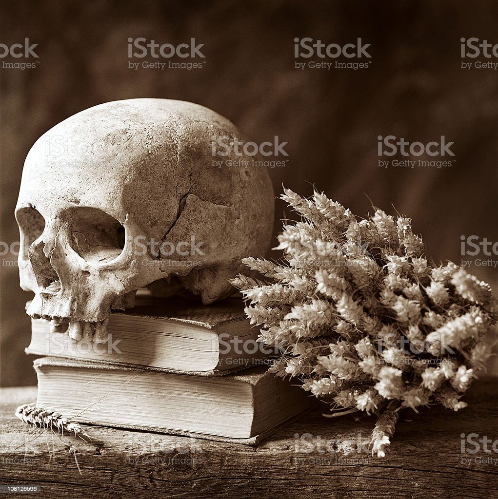 Human Skull Resting on Books, Sepia Toned royalty-free stock photo