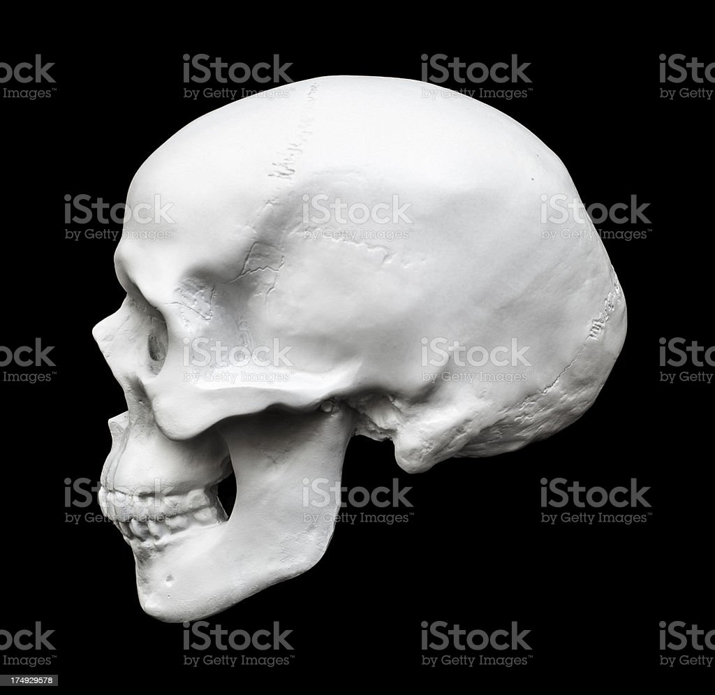 Human skull side view isolated on black stock photo