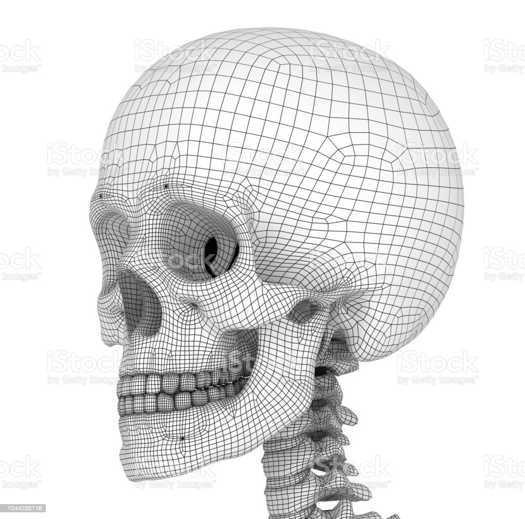 Human skull skeleton, isolated. Medically accurate 3d illustration . stock photo