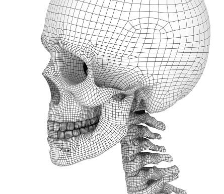 Mänsklig Skalle Skelett Isolerade Medicinskt Korrekt 3d Illustration-foton och fler bilder på Anatomi